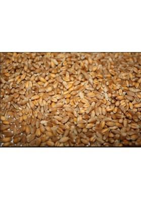 Grano de trigo limpio KUTYA 16x400gr TR